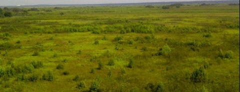 Paynes Prairie Preserve State Park is one of Favorites in Gainesville.