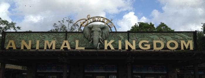 Disney's Animal Kingdom is one of Mis lugares más queridos !.
