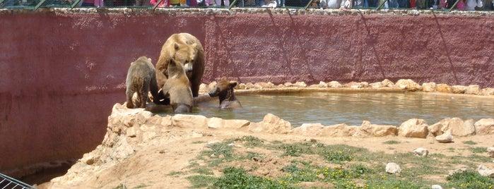 Αττικό Ζωολογικό Πάρκο (Attica Zoological Park) is one of Ελλαδα.