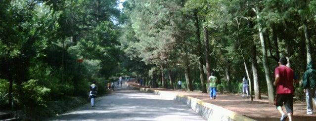 Bosque de Tlalpan is one of 100 Perfectas Ideas para Dominguear.