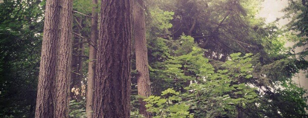Llandover Woods is one of Seattle's 400+ Parks [Part 1].