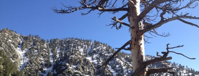 Mt. Baldy is one of My Most Visited Places!.