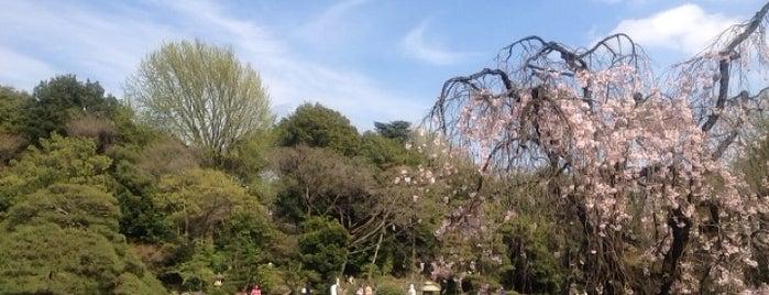 Shinjuku Gyoen is one of Favorite Parks around the Globe.