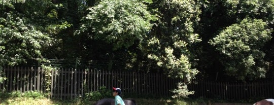 Yoyogi Pony Park is one of 公園.