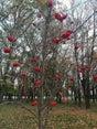 Фото пользователей 1 с foursquare.com