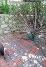 Kuala Lumpur Bird...