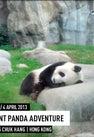 Giant Panda...