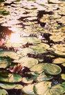 Lake Ad Excellentiam...