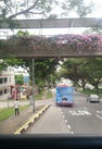Bus Stop 63399...