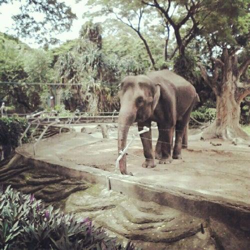 Thảo Cầm Viên (Saigon Zoo And Botanical Garden)
