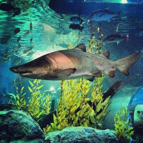Siam Ocean World (สยามโอเชี่ยนเวิลด์)