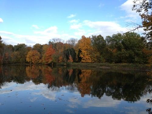 Cincinnati Nature Center (Rowe Woods)