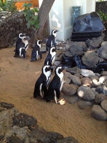 Penguins at The Hyatt