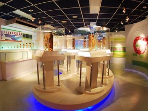 พิพิธภัณฑ์การแพทย์ศิริราช (Siriraj Medical Museum)