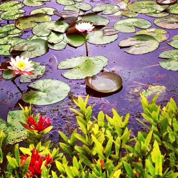 台北植物園 Taipei Botanical Garden
