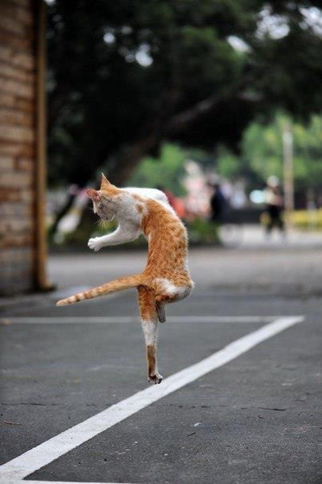 работника картинка кот бежит на работу товары