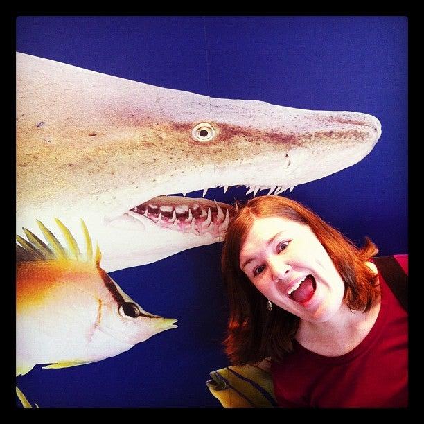 Ocean Journey - TN Aquarium