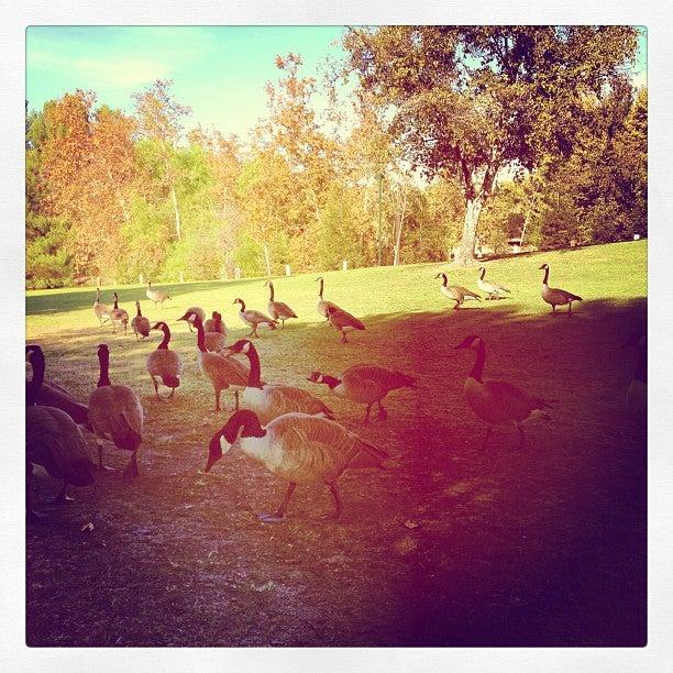 Rancho Simi Community Park