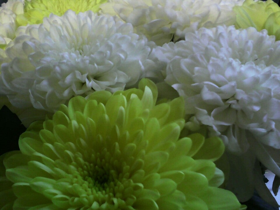 Цветы северо-запада на манчестерской официальный сайт
