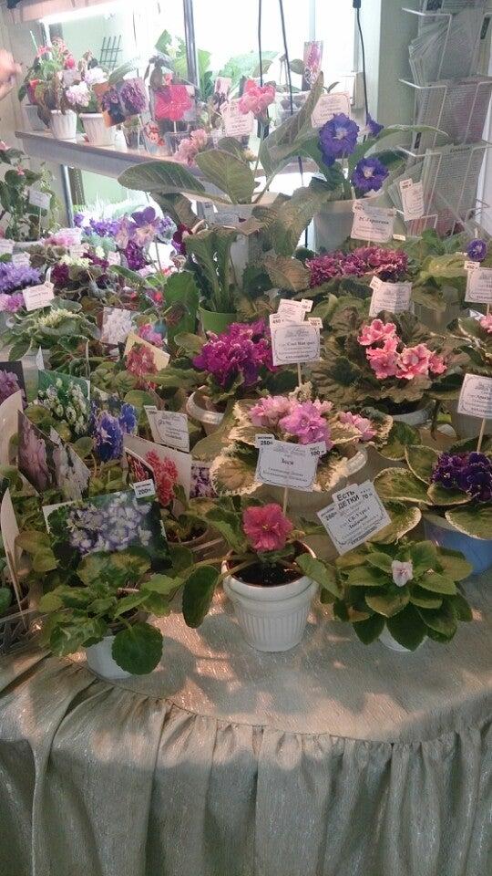 Букет, интернет магазин цветов фиалок днепропетровск