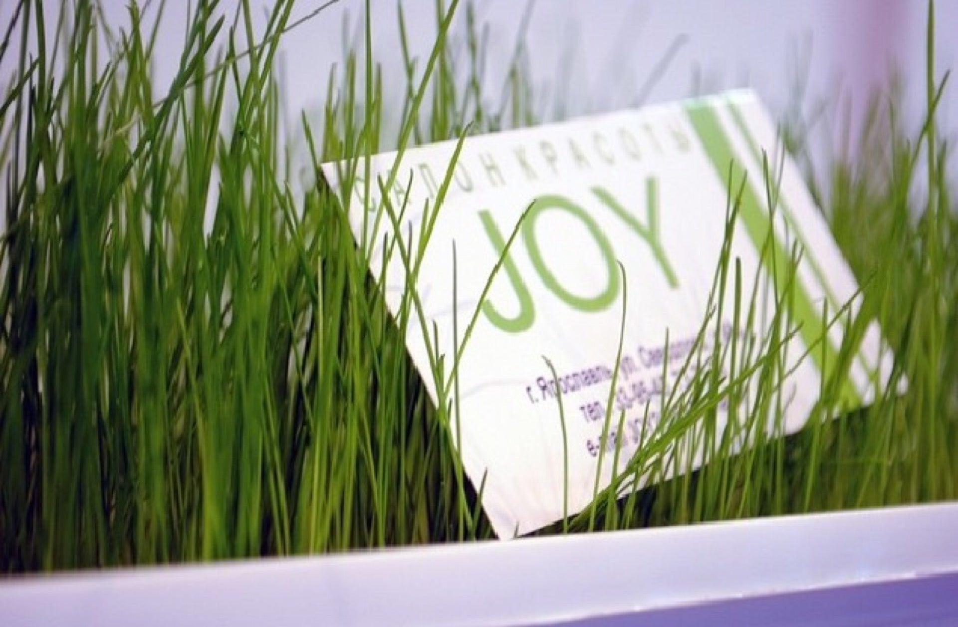 Joy фото 3