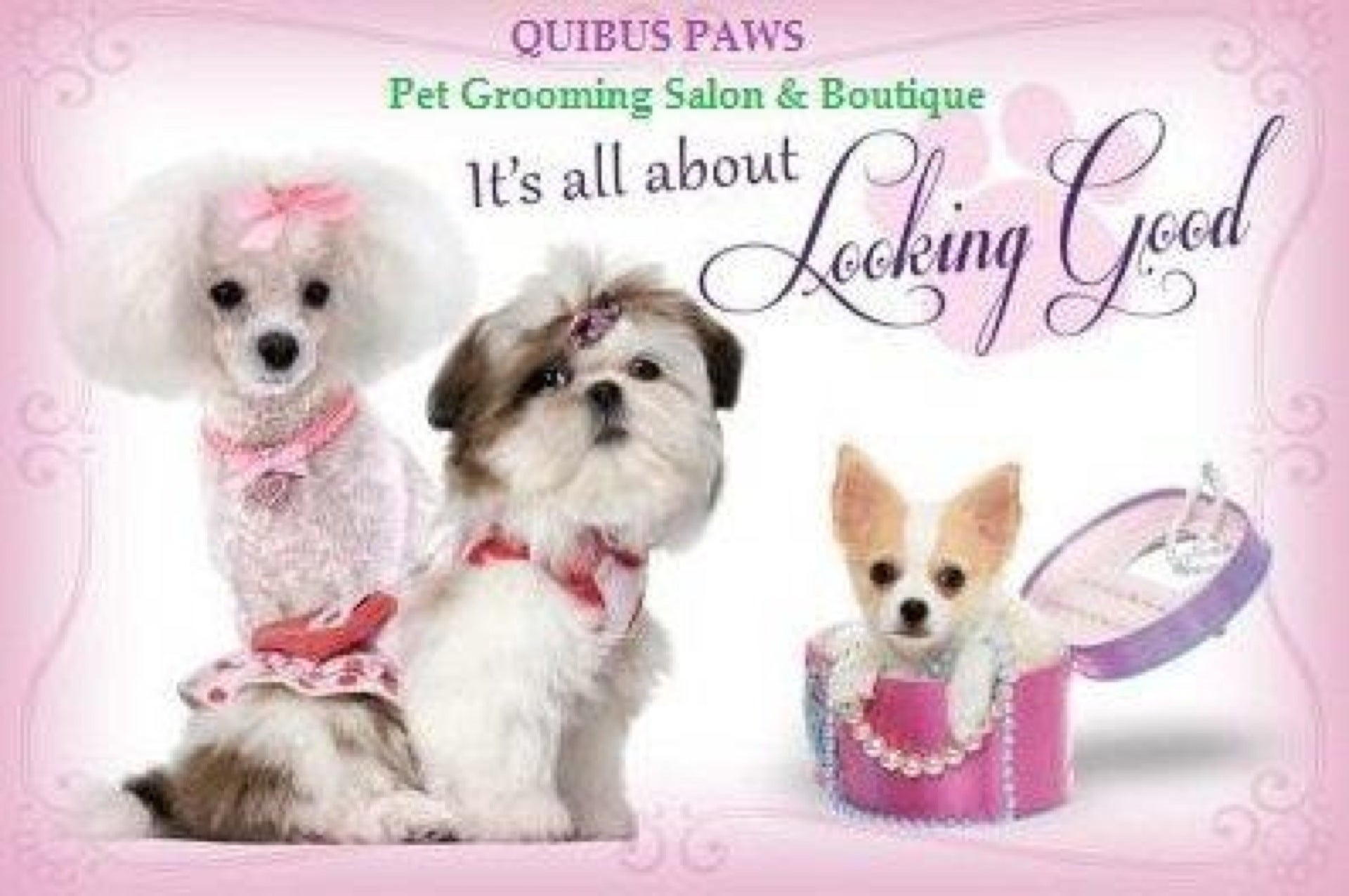 Quibus Paws,is pet designer pet wear distributor,pet boutique/ grooming salon/ is pet distributor