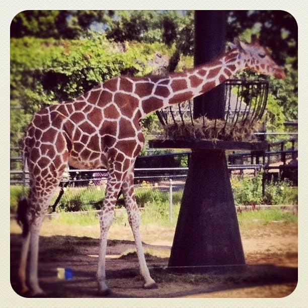 Como Park Zoo