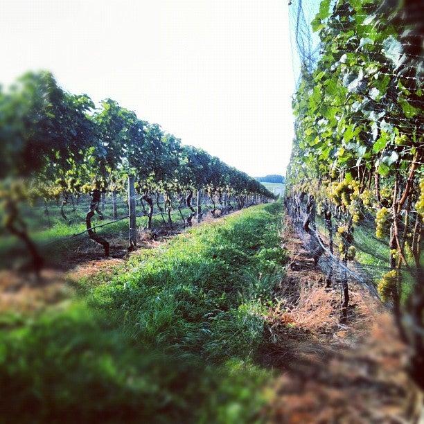 Palmer Vineyards-4