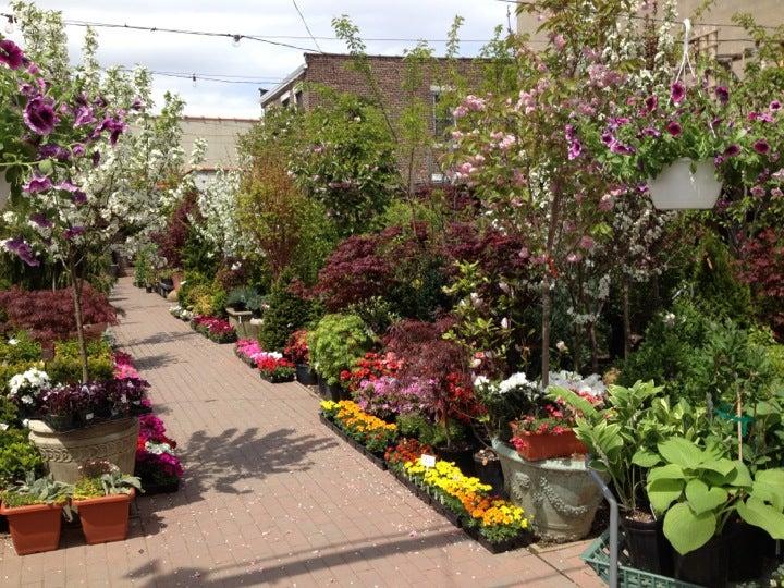 2 more - Chelsea Garden Center
