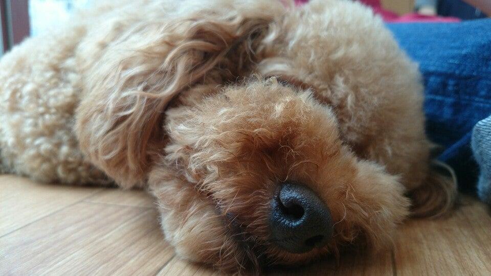 Dog Heart from Aquamarine
