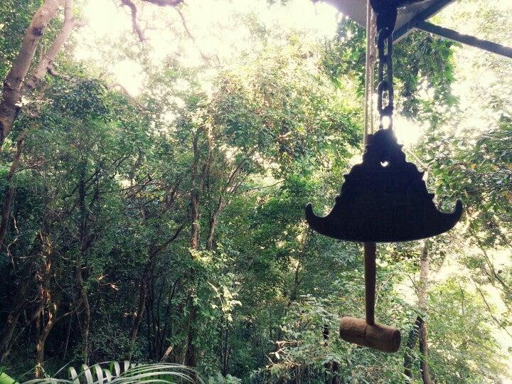 Jungle Trekking In The Rainforest