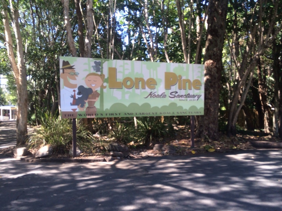 Cuddle A Koala At Lone Pine Koala Sanctuary