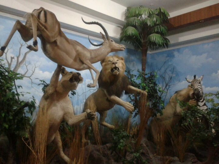 Rahmat Shah International Wildlife Museum & Gallery