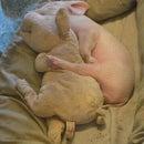 piggy <3 Love
