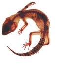 Geckotsu