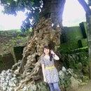 olivia wijaya