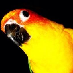Chaosbird
