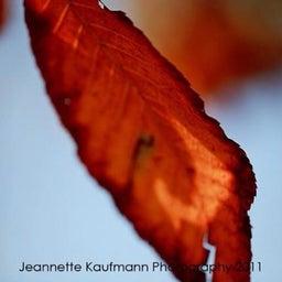 Jeannette Kaufmann